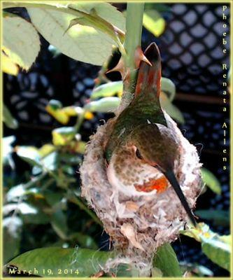 Hummingbird Nest Web Cam